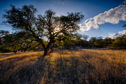 Ranch Prints - Evening Light Print by Peter Tellone