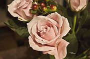Teresa Dixon Metal Prints - Evening Pink Rose Metal Print by Teresa Dixon