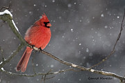 Red Birds In Snow Prints - Evening Snow Print by Gerald Marella
