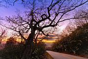 Winter Scenes Photos - Evening Tree by Debra and Dave Vanderlaan