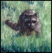 Raccoon Drawings - Evening Visitor by Diana Moses Botkin