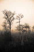 Everglades Cypress Stand Print by Gary Dean Mercer Clark