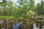 Mangrove Forest Photo Prints - Everglades Lake Print by Rudy Umans