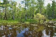 Everglades Lake Print by Rudy Umans