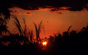 Steven Valkenberg - Everglades sunset