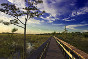 Glass Wall Prints - Everglades Trails Print by Swank Photography