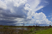 Shades State Park Prints - Everglades Weather Print by Sue  Swank
