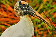 Everglades National Park Posters - Everglades Wood Stork Poster by Adam Jewell
