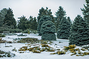 Natural Focal Point Photography - Evergreen Park in...