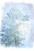 Suzanne Powers - Evergreen Trees In Ice...