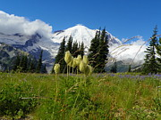Google Mixed Media - Everlasting Beauty - Mount Rainier National Park by Photography Moments - Sandi