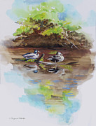 Reflections In River Prints - Everythings Just Ducky Print by Suzanne Schaefer