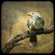 Chordata Prints - Exotic Bird - Guira Cuckoo Bird Print by Gary Heller