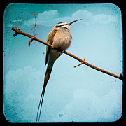 Turqoise Prints - Exotic birds - White throated bee eater Print by Gary Heller