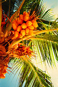 Mango Metal Prints - Exotic Fruit Metal Print by Anita Lewis