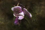 Judy Hall-Folde - Exotic