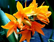 Flower Gardens Photos - Exotic Orange by Karen Wiles