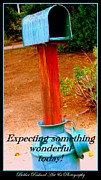 Mail Box Posters - Expecting Something Wonderful Poster by Bobbee Rickard