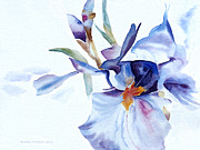Edge Paintings - Exploding Iris by Barbara McMahon