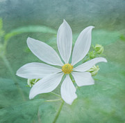White Flower Photos - Expressions by Kim Hojnacki
