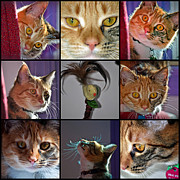 Frisky Photo Posters - Expressive Faces Poster by Roger Reeves  and Terrie Heslop