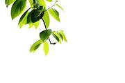 Karol  Livote - Extending Branch Of Life
