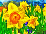 Phipps Conservatory Prints - Extreme Daffodil Print by Digital Photographic Arts