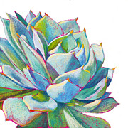 Succulents Posters - Eye Candy Poster by Athena  Mantle