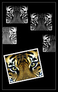 Alter Ego Framed Prints - Eye Of A Tiger 5 Framed Print by Ben Yassa