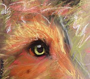 Fox Pastels Prints - Eye of Fox Print by Michelle Wolff