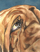Bloodhounds Prints - Eye of Hound Print by Kimberly Lavelle