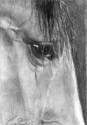 Forelock Drawings - Eye of the Beholder by Caron Wiedrick