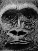 Gorilla Drawings - Eye of the Beholder by Irving Starr