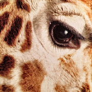Patricia Januszkiewicz - Eye of the Giraffe