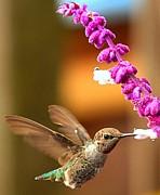 Adam Jewell - Eye Of The Hummingbird
