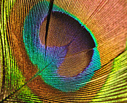 Plumage Acrylic Prints - Eye of the Peacock Acrylic Print by Kaye Menner