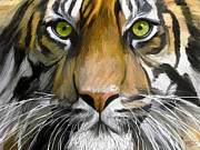 Shepherd Art - Eye of the Tiger by James Shepherd