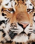 Ramona Johnston - Eye of the Tiger