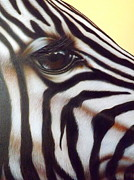 Darren Robinson - Eye of the Zebra