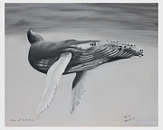Whale Pastels Framed Prints - Eye of Wisdom Framed Print by Bob Timmons