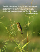 Bible Photos - Eye On The Sparrow by Robert Frederick