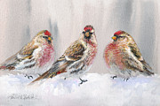 Crossbill Paintings - Eyeing The Feeder 2 Alaskan Redpolls In Winter by Karen Whitworth