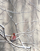 Crossbill Paintings - Eyeing The Feeder Alaskan Redpoll In Winter by Karen Whitworth