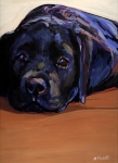 Labrador Paintings - Eyes For You by Molly Poole