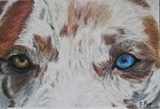 Multicolor Pastels Prints - Eyes of Catahoula Print by Joan Pye