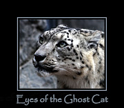 Nick Gustafson Prints - Eyes of the Ghost Cat Print by Nick Gustafson