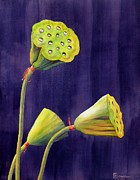 Floral Watercolor Painting Originals - Eyes Of The Lotus by Robert Hooper
