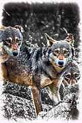 John Haldane - Eyes of the Red Wolf