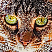 Kitten Digital Art - Eyes of the Tabby  by David G Paul