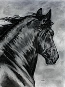 Royal Art Pastels Framed Prints - Fabiano - Friesian horse Framed Print by Lucka SR